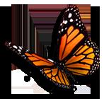 Vlinder_Schaduw_Rechts